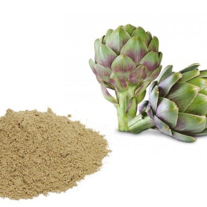 Artichoke Extract manufacturers exporters suppliers in India